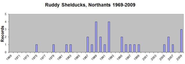 Ruddy Shelducks by Year