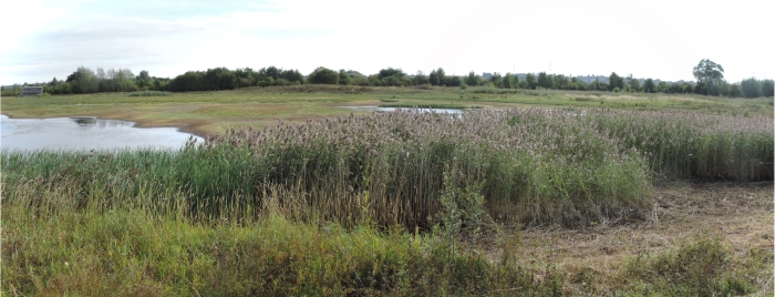 Summer Leys scrape: the view from Pioneer Hide before reprofiling (Steve Brayshaw)