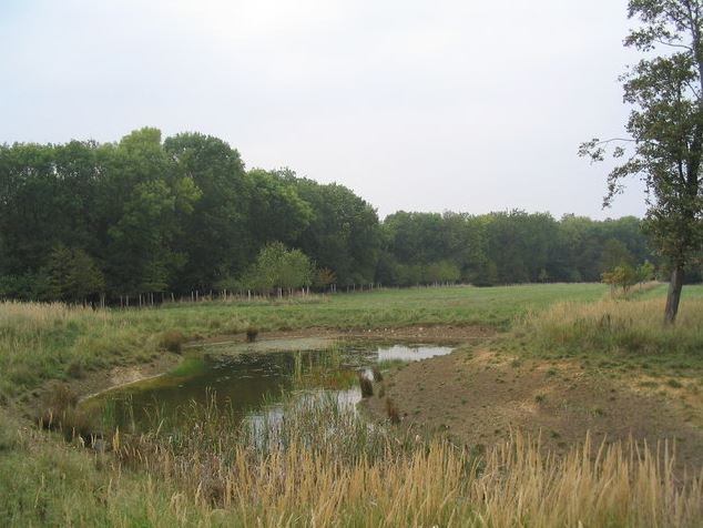 View from the wildlife hide, Fineshade Wood (Tim Heaton, Wikimedia Commons). Views expressed in the accompanying text are not necessarily those of the photographer.