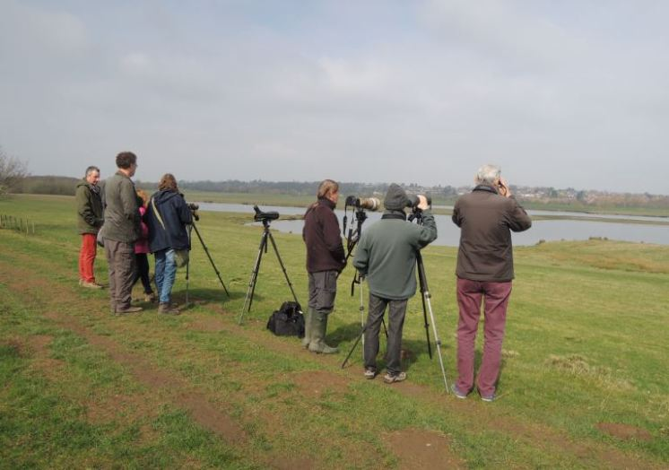 Avocet Twitch