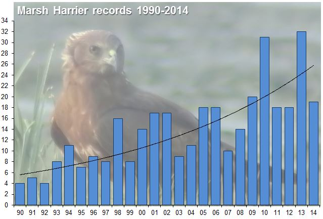 Northamptonshire records of Marsh Harrier for the last 25 years with upward trend. Background image: Eastern x Western Marsh Harrier hybrid, Hong Kong, March 2011 (Charles Lam).