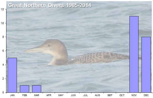 Northamptonshire Great Northern Divers. Occurrence pattern for the past 30 years, based upon arrival date. November is the peak month for arrivals.