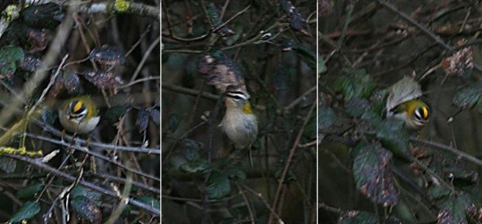 Firecrest, Stanwick GP, 3rd March 2016 (Steve Fisher)