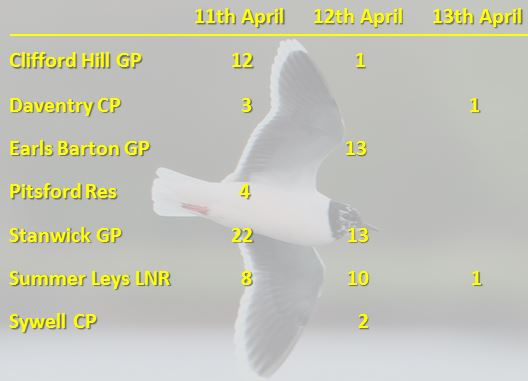 Little Gulls by location, 11th-13th April 2016. Background image: Bob Bullock