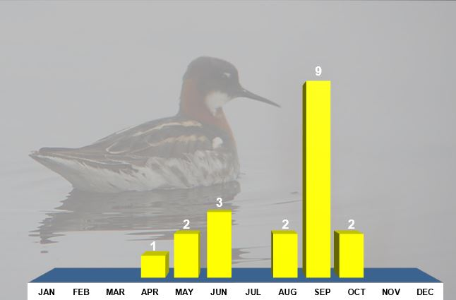 Red-necked Phalaropes, Northamptonshire, all records. Background image, female Red-necked Phalarope, Norway, June 2015 (Mike Alibone)