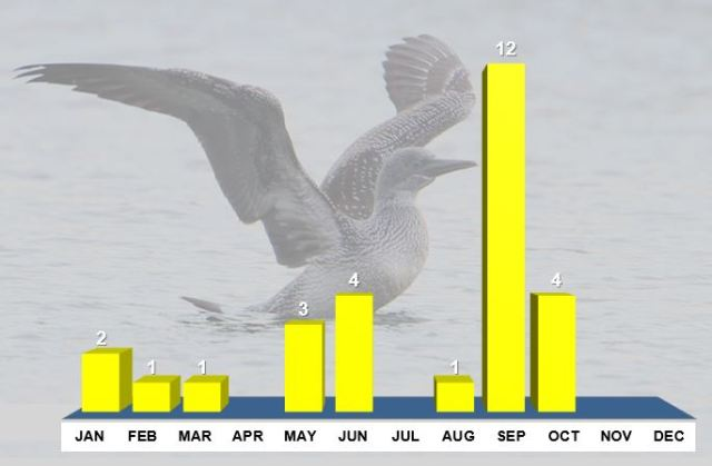 Northamptonshire Gannets, distribution of post-1969 records by month. Background image juvenile Gannet, Thrapston GP, 14th October 2013 (Bob Bullock)