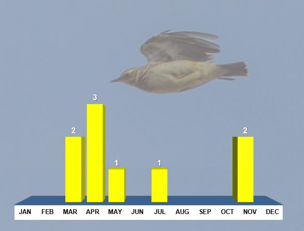 Northamptonshire Woodlarks, distribution of records post-1969 by month. Background image Woodlark (Ron Knight/Wikimedia Commons)